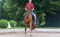 Cavallo Pferd lahm